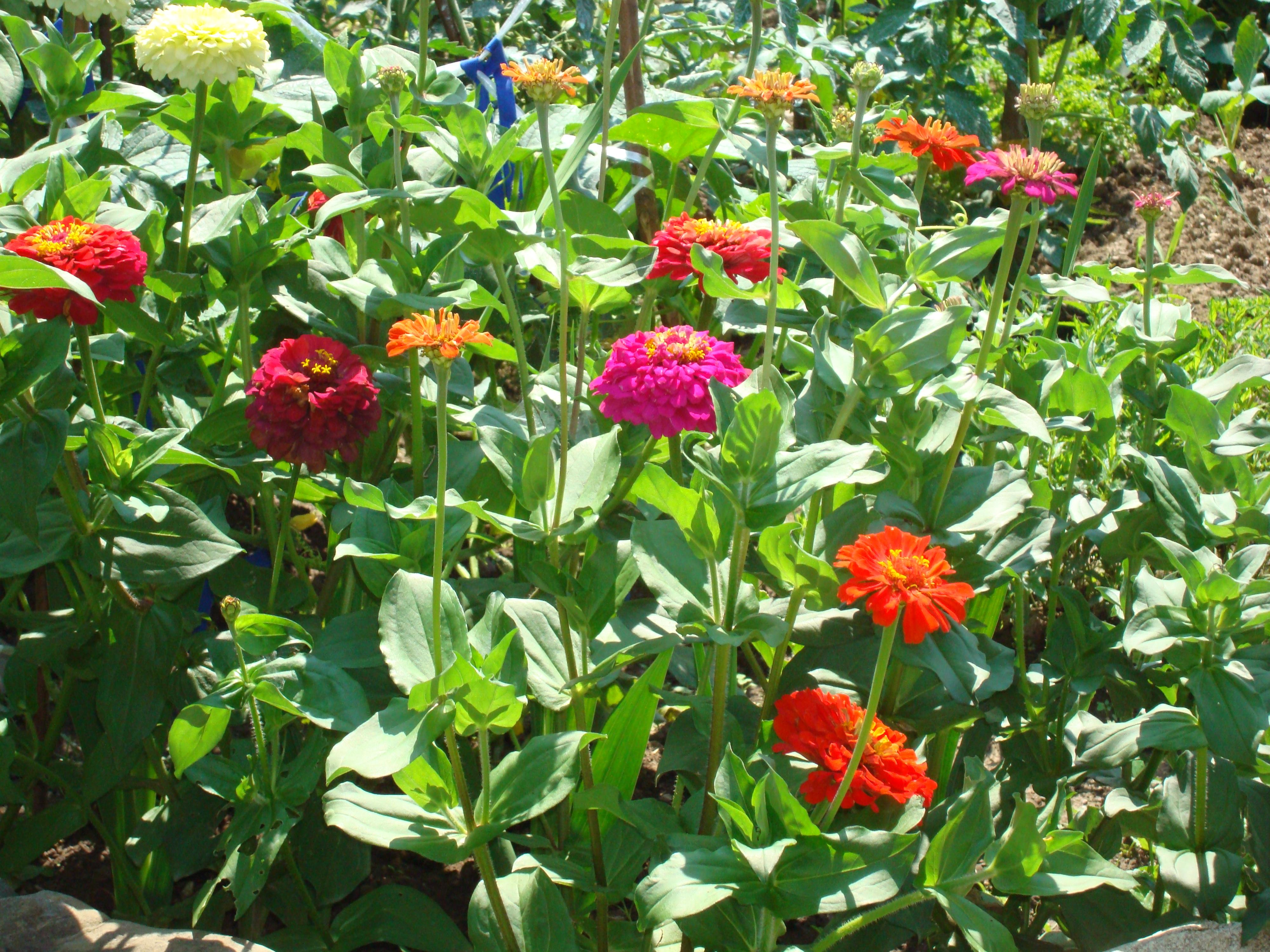 16. Цветната градина